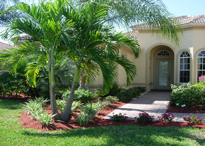 Christmas palm trees for sale north fort myers for Myers lawn and garden