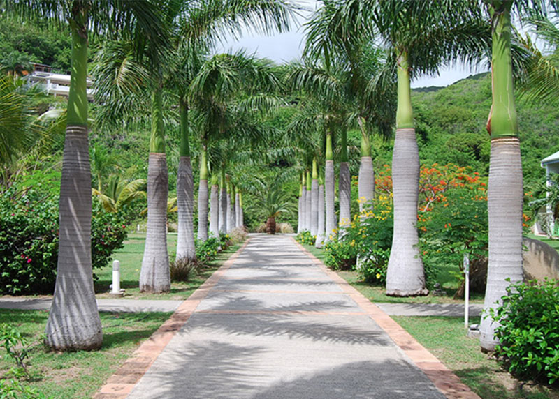 Royal palm trees for sale north fort myers for Myers lawn and garden